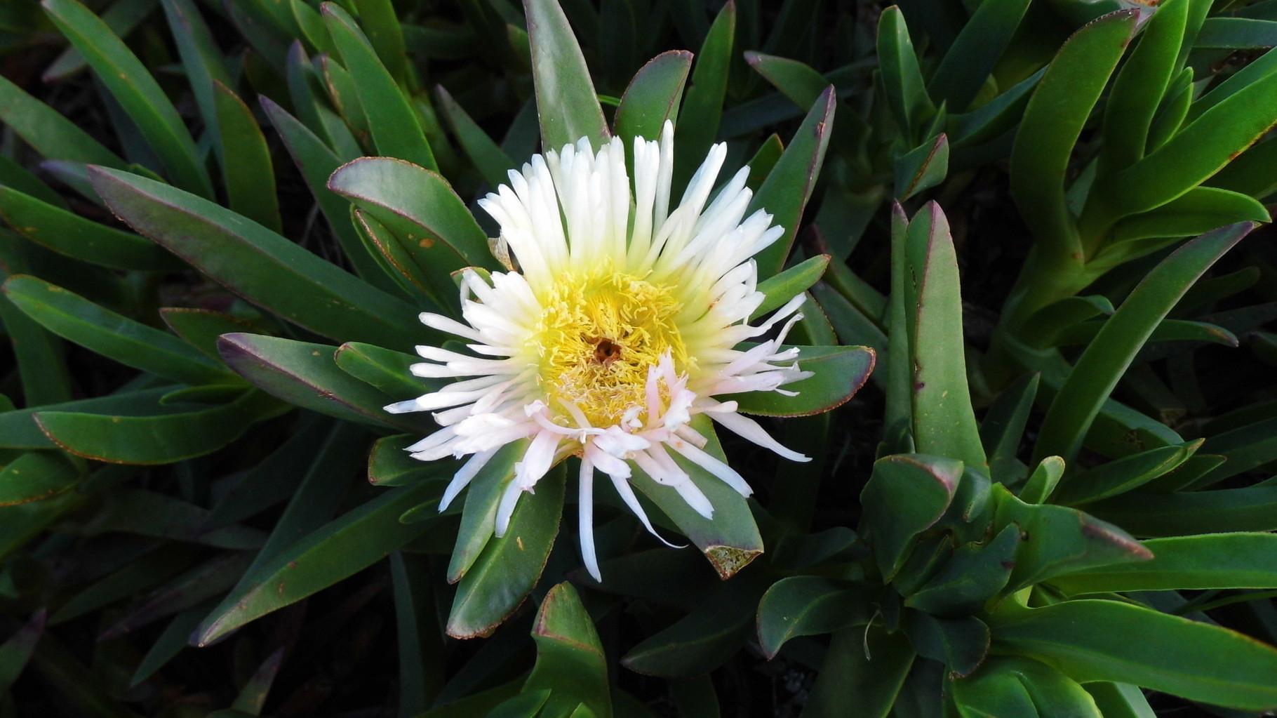 une fleur au bord de la ligne de partage des eaux