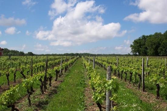 Pays du Pineau et Cognac