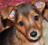 Melisa - in Spanien adoptiert!