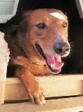 Tito - in Deutschland adoptiert!