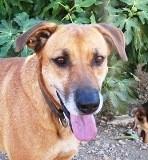 Luca - in Deutschland adoptiert!