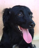Ottar - in Spanien adoptiert!