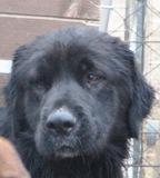 Bruno -in der Schweiz adoptiert!