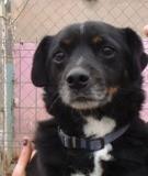 Lupo - in Deutschland adoptiert!