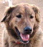 Yuma - in Spanien adoptiert!