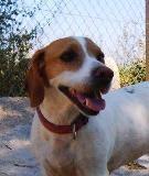 Chispa - in Spanien adoptiert!