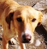 Savannah - in Spanien adoptiert!