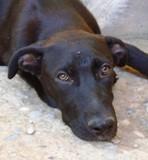 Lola - in Deutschland adoptiert!