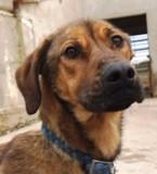 Cendra - in Deutschland adoptiert!