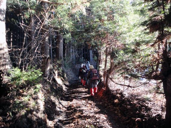 3.   登山口進むと杉樹林帯で鬱蒼としてくる