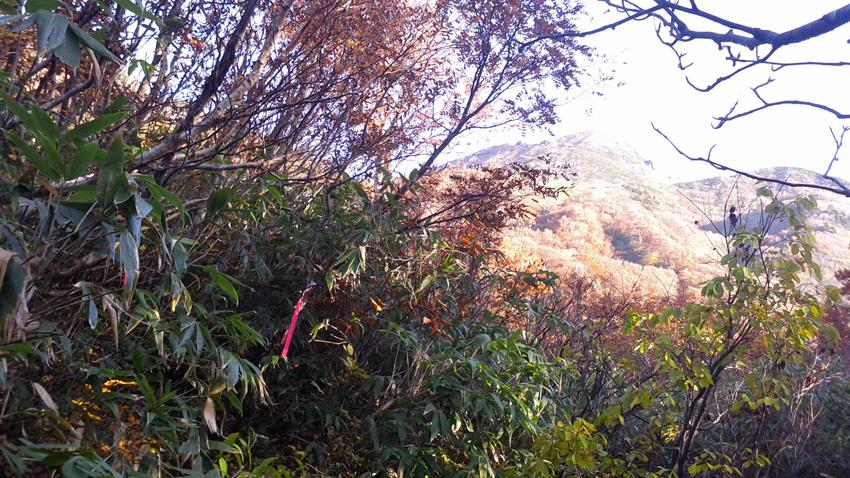 6.  暫く登ると湿地帯に出るが直進は行き止り。手前左折登山道ガイドテープあり