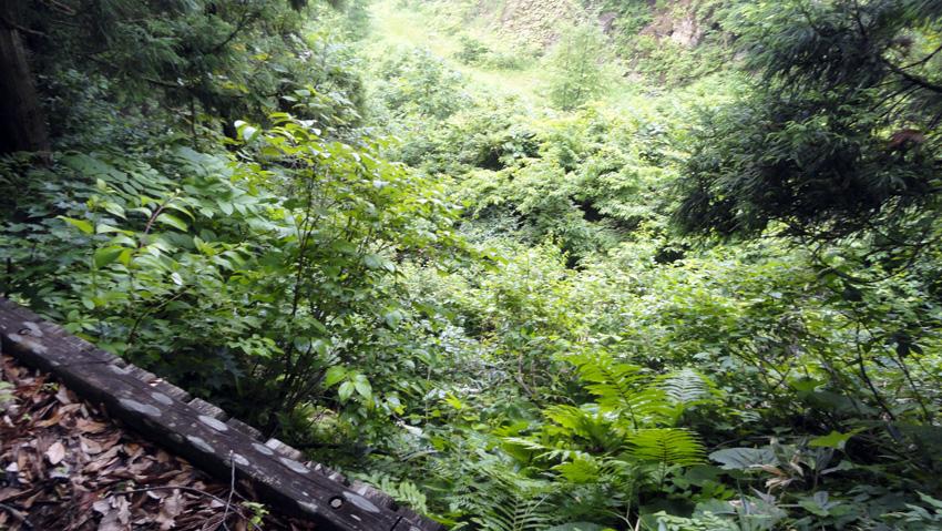 14.  木製小橋の上から、右手下方に登って来た広い林道が見える