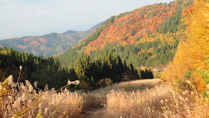 4.  近くの「中野公園」紅葉は過ぎたが「大高森」は鮮やか