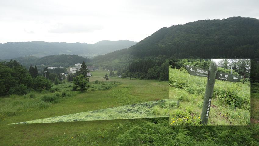 15.  ゲレンデを真っすぐ横断で、右折指示の「自然歩道」の標識。下に舗装道路と「一本アカマツ」見える