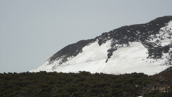 「大岳」東斜面に50人程の県外客ツアー(箒場岱コース、スタート地点から見る)
