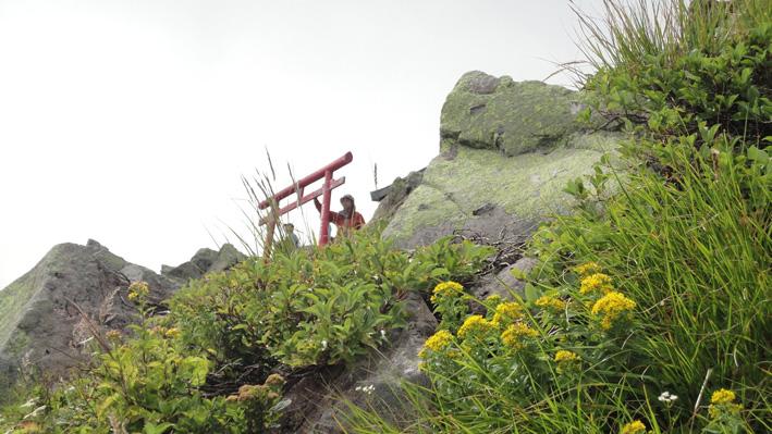 上方に山頂の鳥居を確認出来る