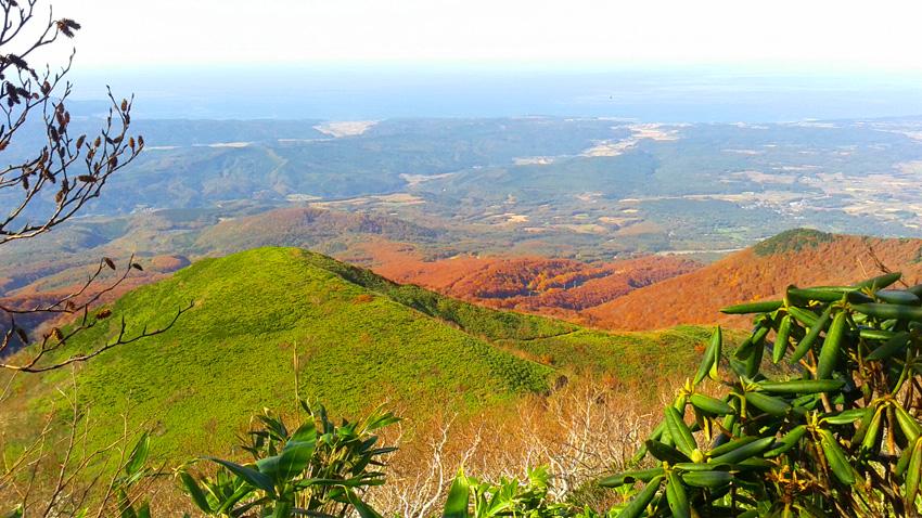 9.  緑の山頂が「西法寺森」で、背丈ほどの藪ながら中腹に登山道が見える