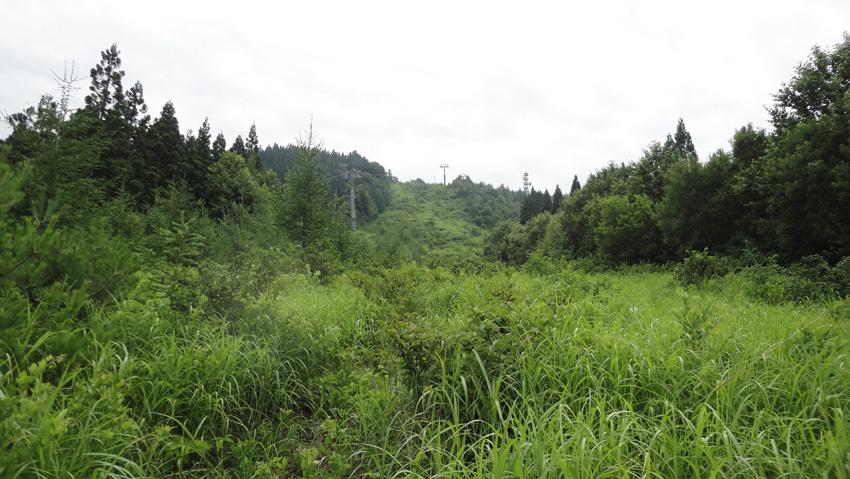 5.  背丈超えるヤブながら、登山路は綺麗に刈り払い。山頂のアンテナが見えてきた