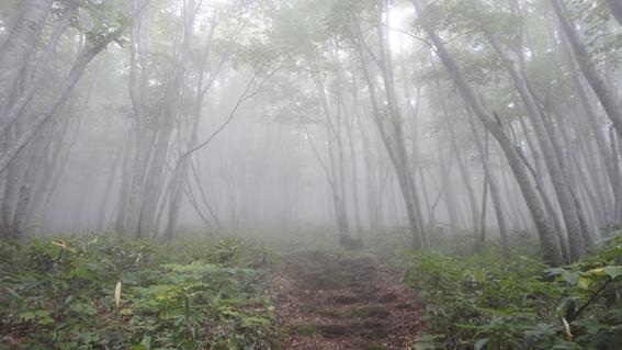 ブナ樹林帯の参道はユッタリ