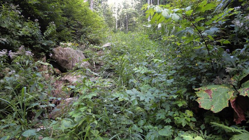 出口付近の沢登山路は藪化進む