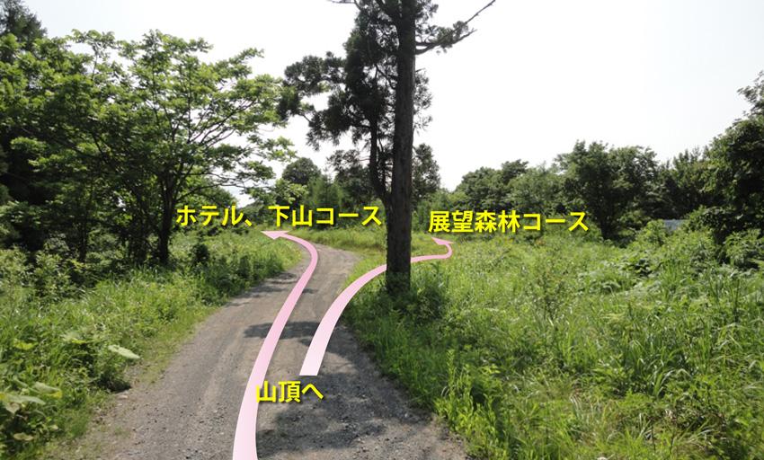 14.  帰路、ガイドテープのある「森林コース」へ至る登山口を確認