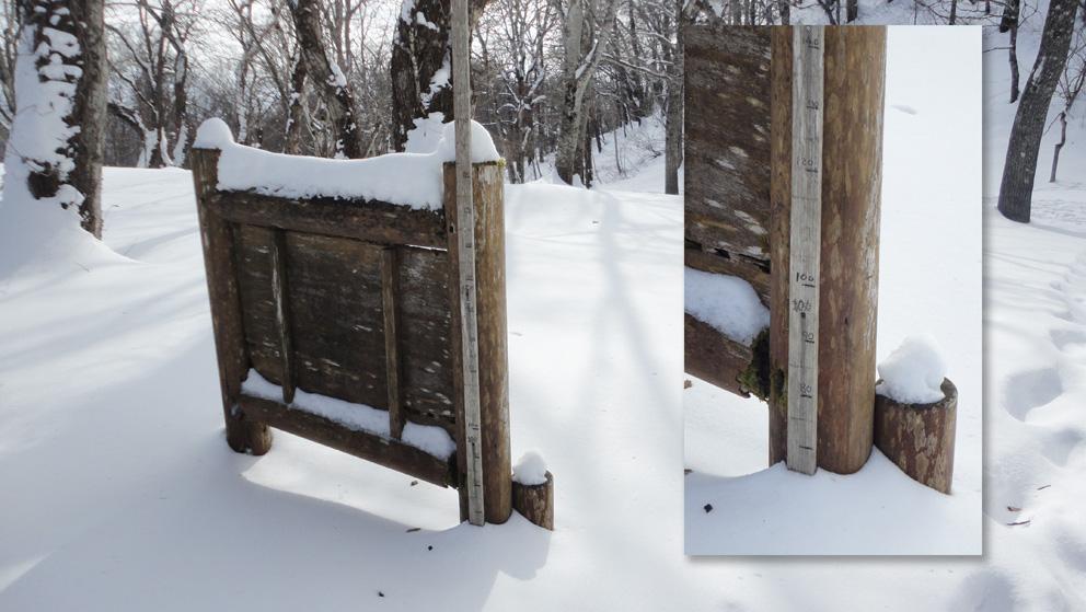 「寺屋敷広場」付近の積雪は75cmと少ない