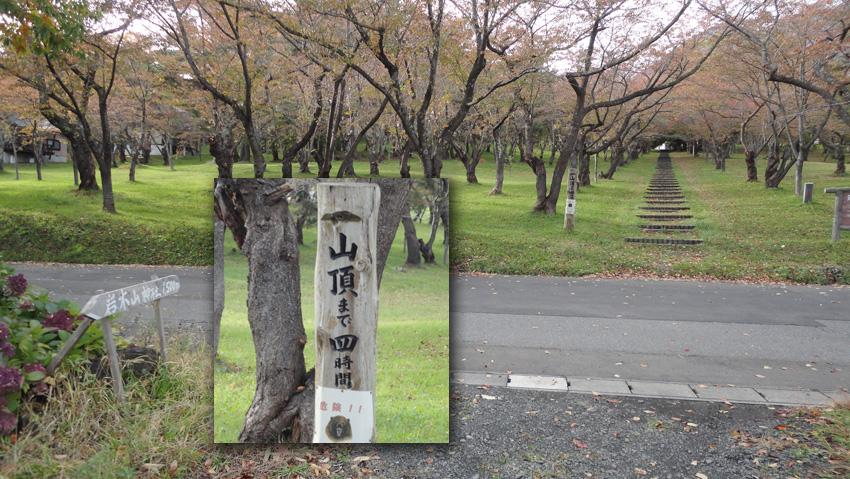 やがて「岩木山桜林公園」に出る。公園中央の「登山口」へのアプローチ道