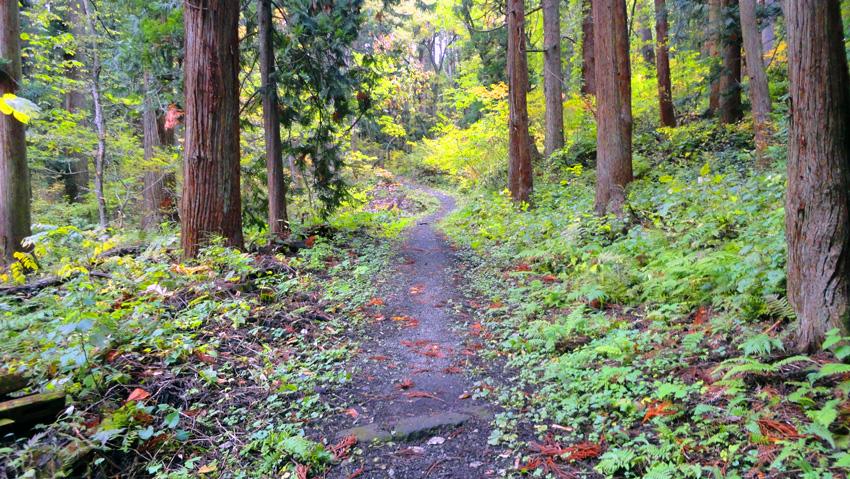 熊でも出そうな鬱蒼とした杉林を1,500mも進む(この樹林帯が神社を守った?)