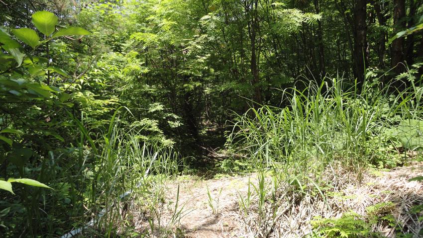 11.  ホテルの裏道から長く広い林道抜け、涼しい「森林コース」へ