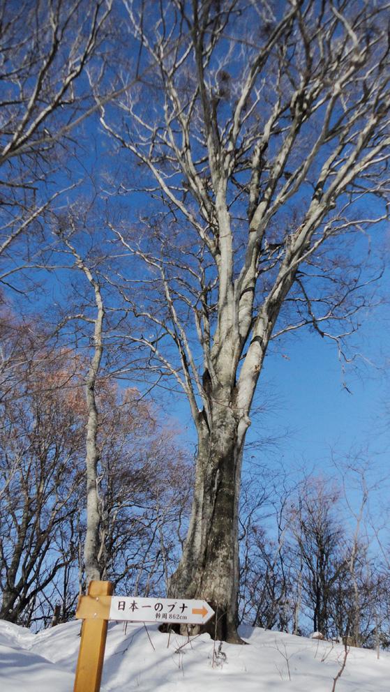 暖冬少雪で「春彼岸」(3月20日)の墓掘りを思い出す