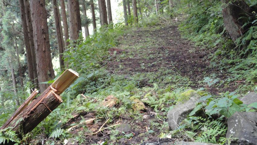 9.  気になってた「自然歩道」の大きな倒木も処分され、刈り払いも万全