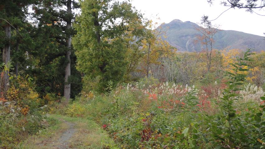 途中で岩木山を臨めるが又、暗い樹林帯に