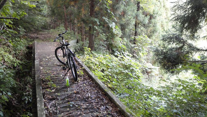 8.  「自然歩道」は道幅も広くユッタリし、並走する林道とは格段の差