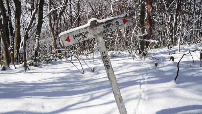 4.  東屋から200mで103P。「林間歩道」標識あり