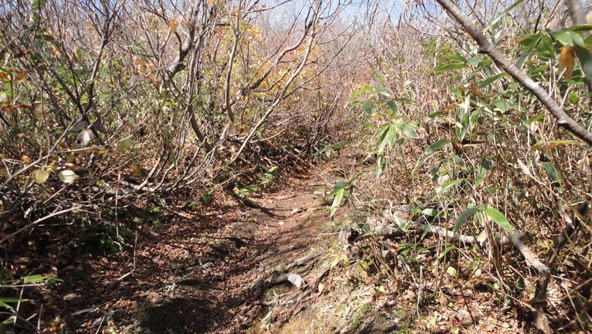 「焼止」まで樹林帯ながら明るい登山道が続く