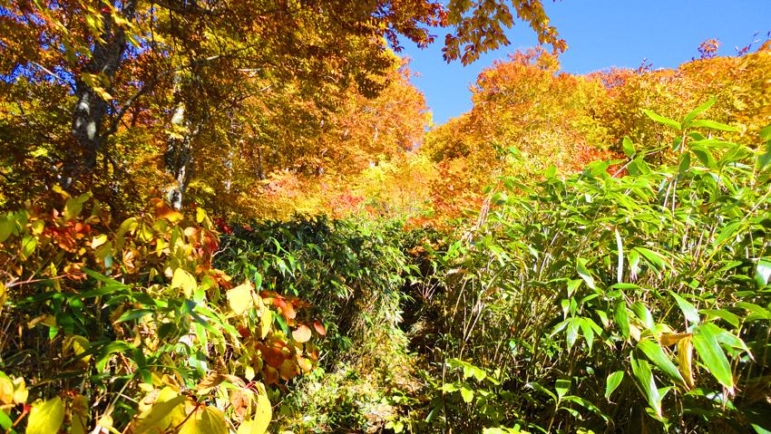 紅葉が真っ盛りで気持ちよい山行になりそう