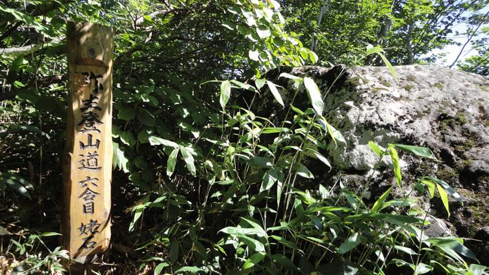 「六合目・姥石」から頭を超えるヤブながら登山道はしっかり付いている