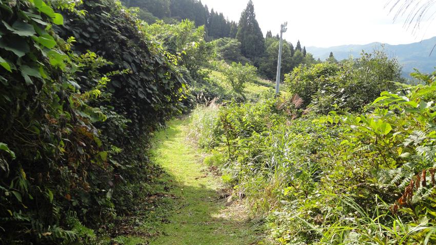 10.  「自然歩道」の気持ち良さに癒され、アッという間にゲレンデに出る