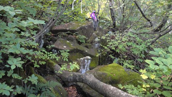 「伯母岩」からの80mほどは難所だが、樹間から七里長浜や鯵ヶ沢方面が