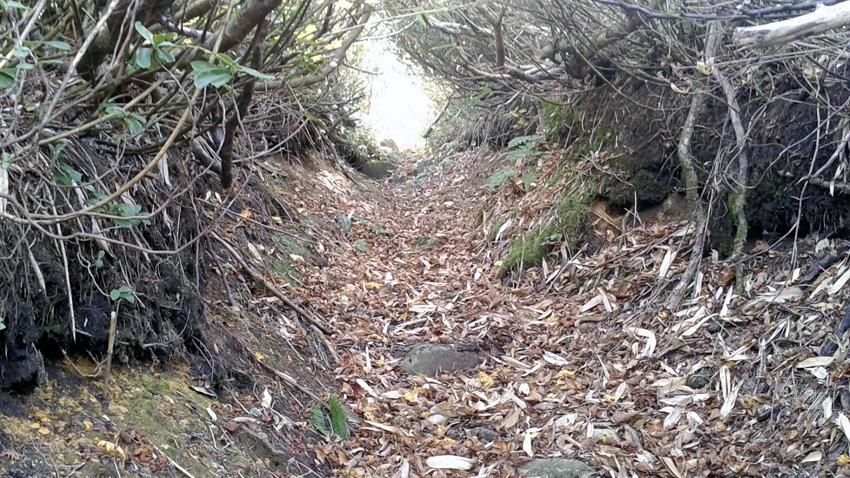 8.  「西法寺森」手前までは刈り払い。以降は枝払いのみだが登山道明確でスムーズ