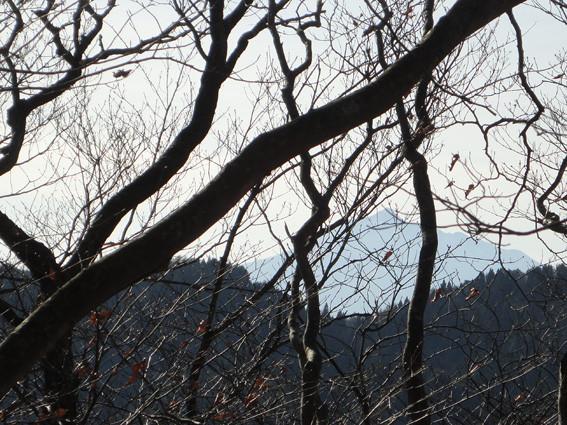 5. 「ドングリの森」分岐から岩木山