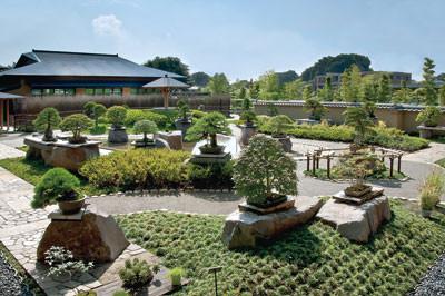 大宮盆栽美術館。庭園には沢山の盆栽が展示されています。(写真撮影は禁止の為、写真はネットから引用しています)