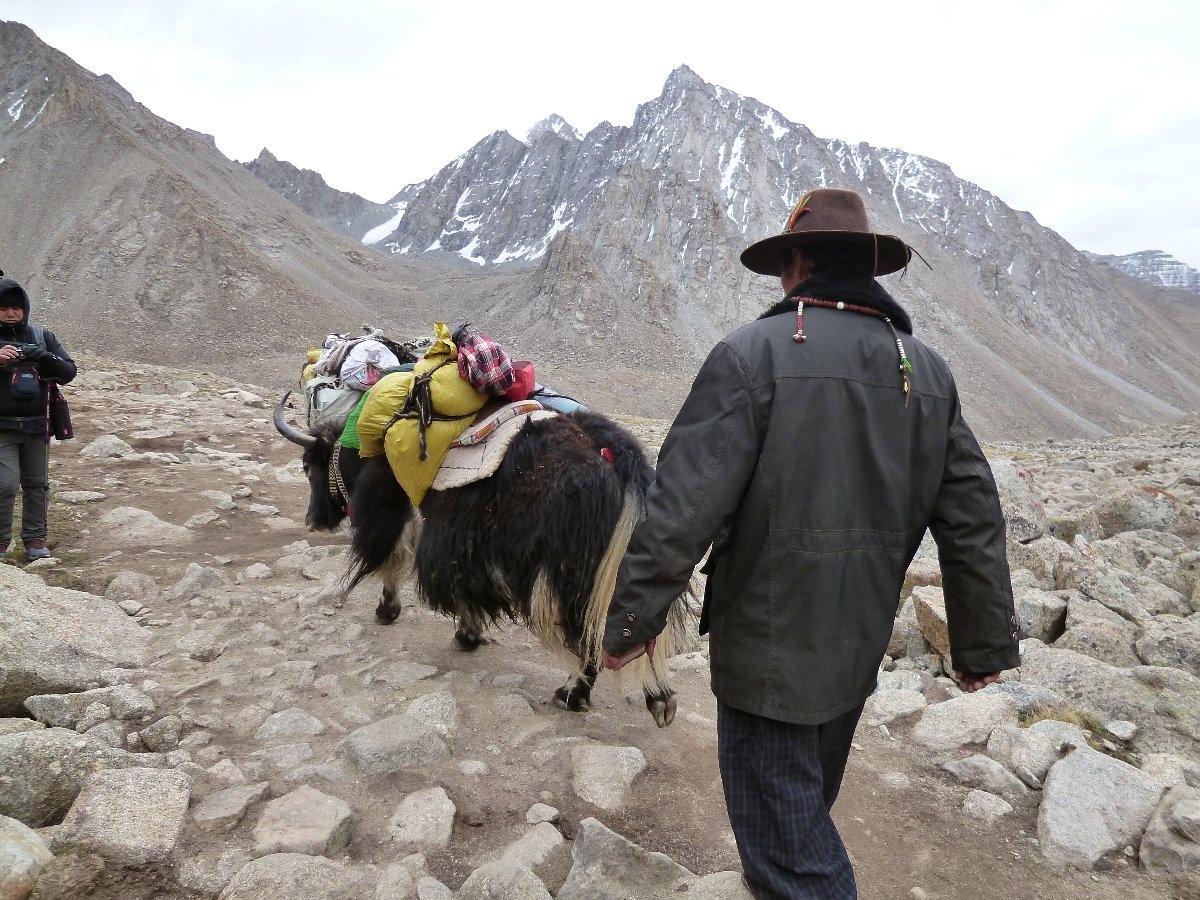荷物を運ぶヤクとチベット人スタッフ