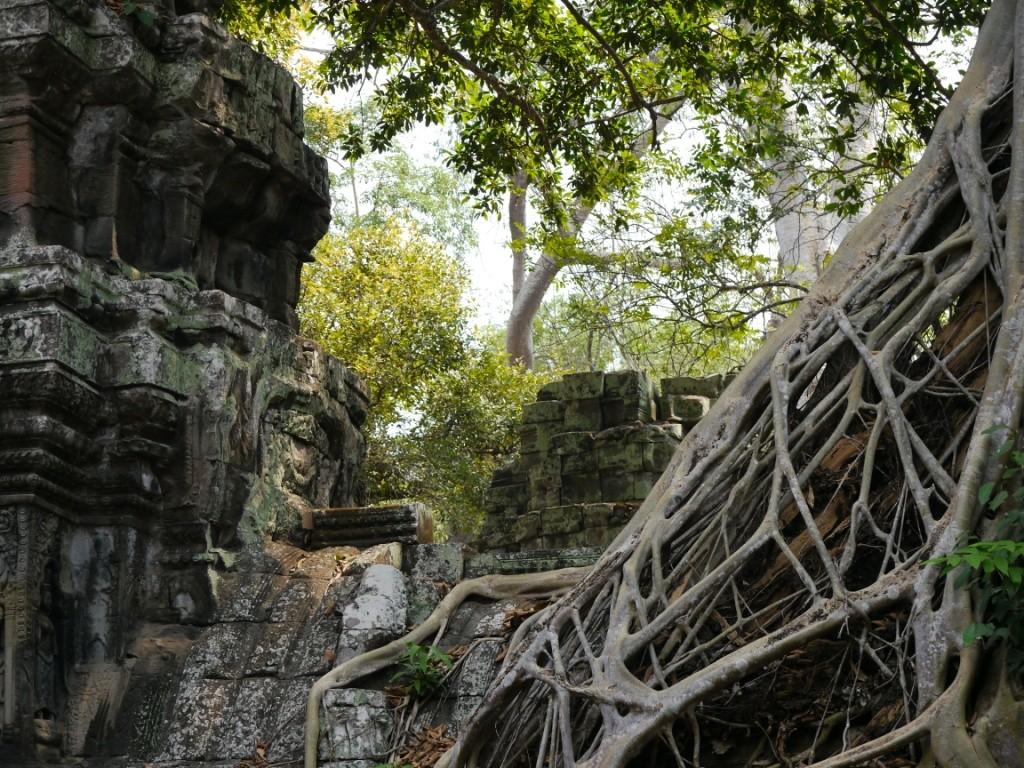 In Jahrhunderten vom Dschungel zurück erobert