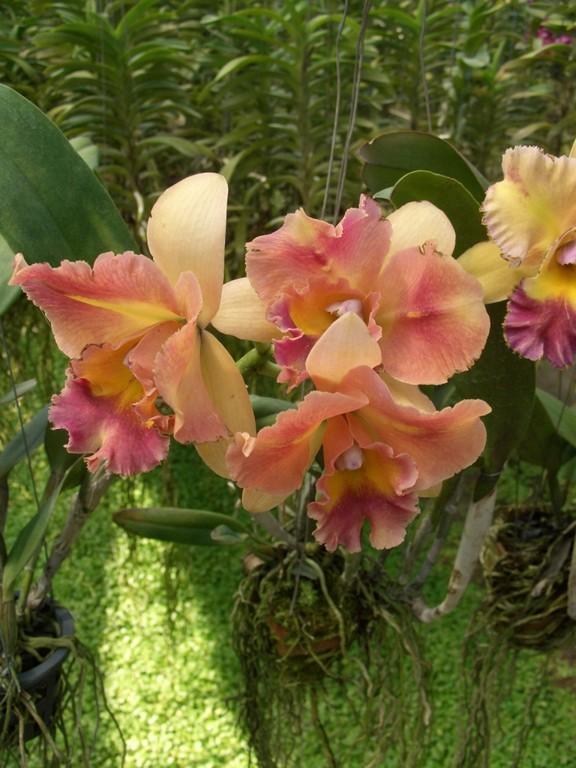 Zauberhafte Orchideenwelt