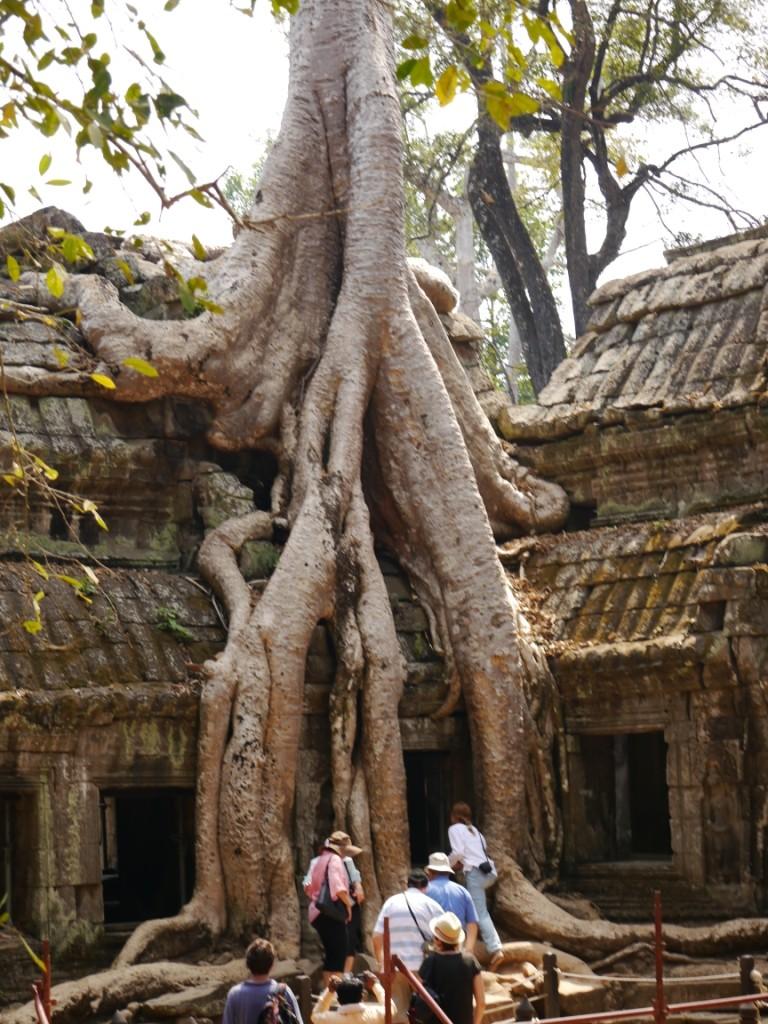 Tempel vom Dschungel fest umschlossen