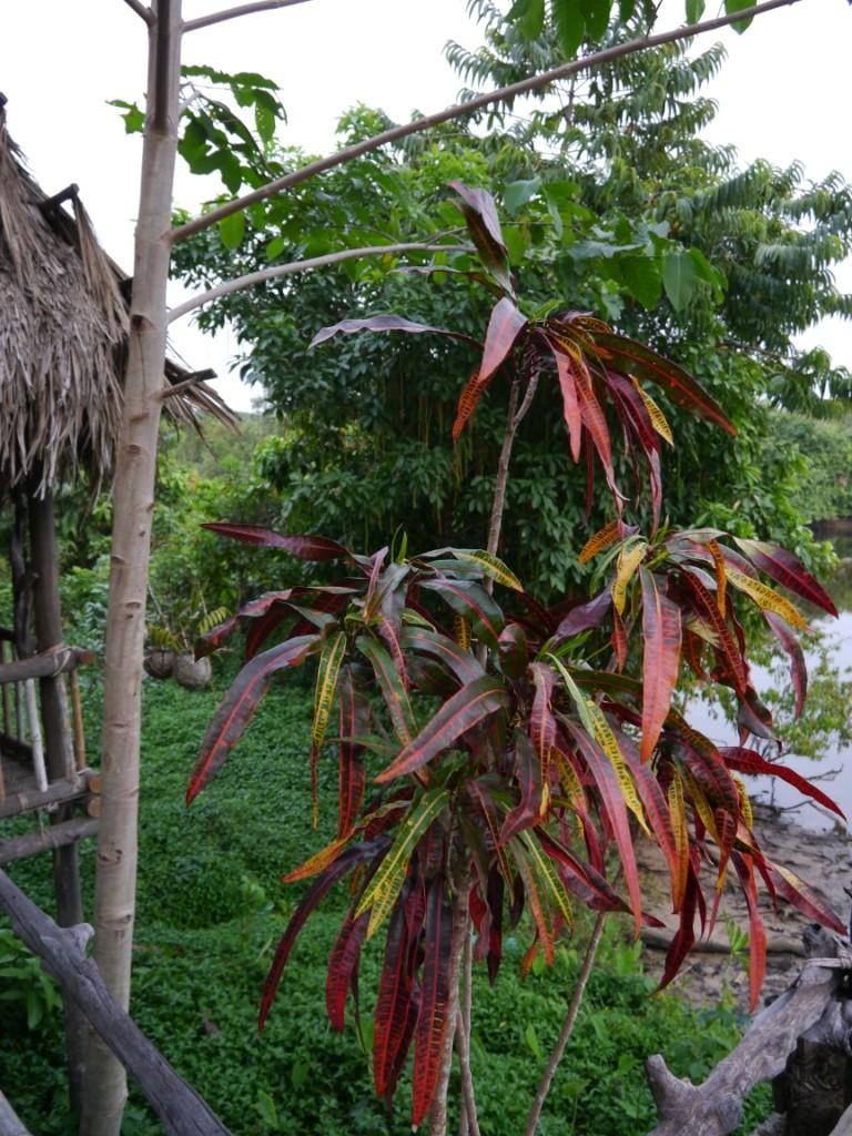 Eine prächtige Pflanzenvielfalt die uns umgibt