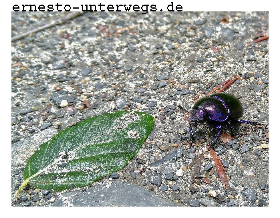 Selbst Käfer können auf den Sträßchen unbehelligt spazieren gehen.