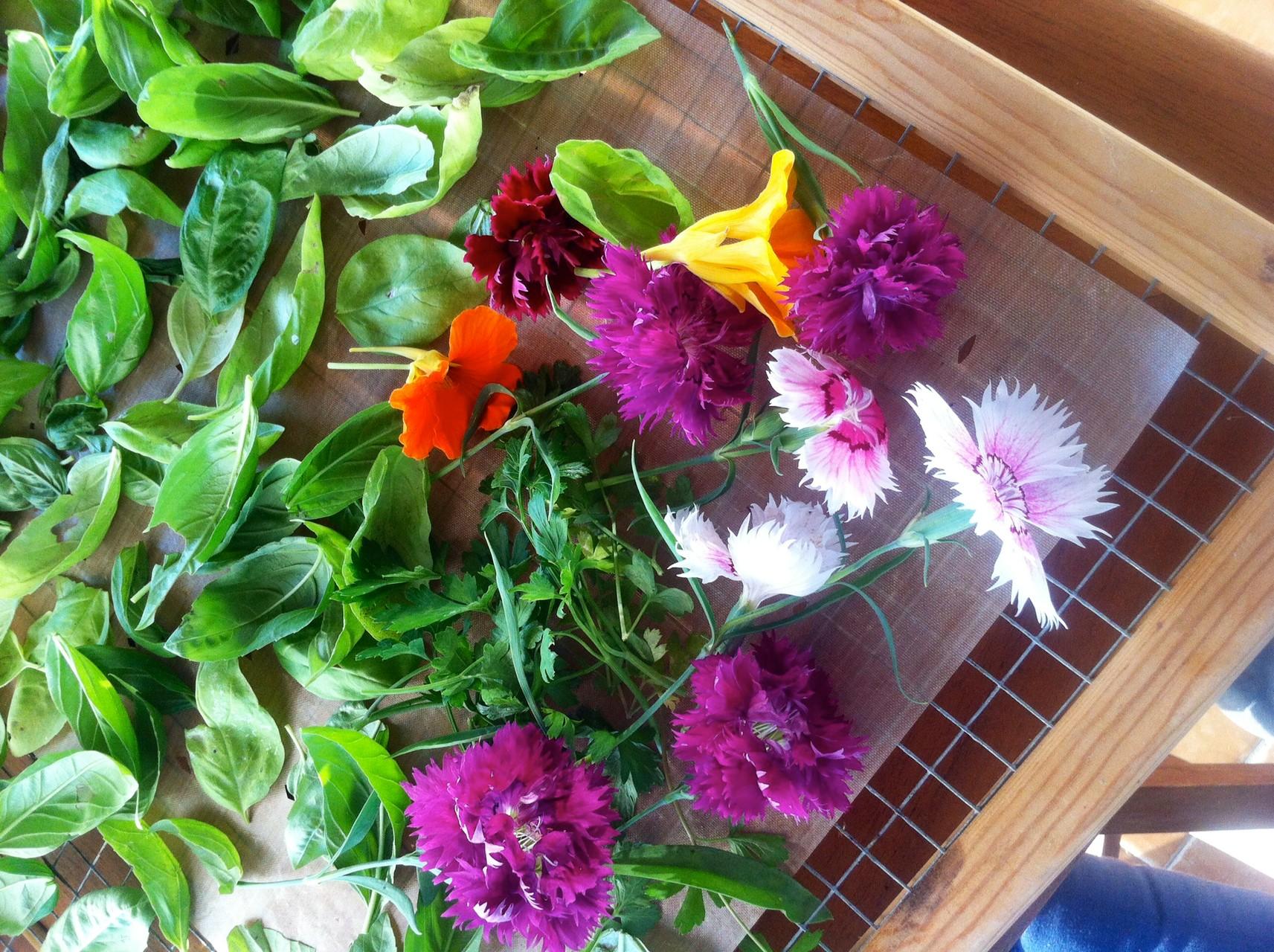 Flores comestibles en el deshidratador