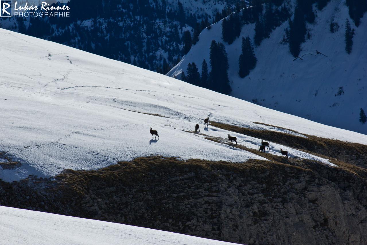 Gamsrudel, Hoher Ifen Plateau, Kleinwalsertal